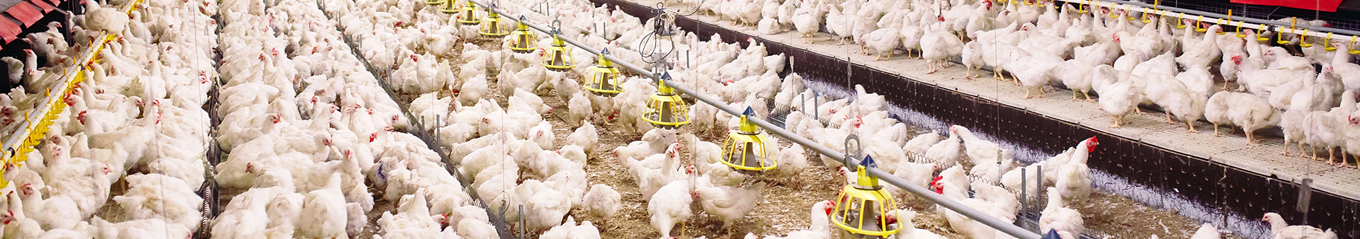 pressure transducers for poultry farms